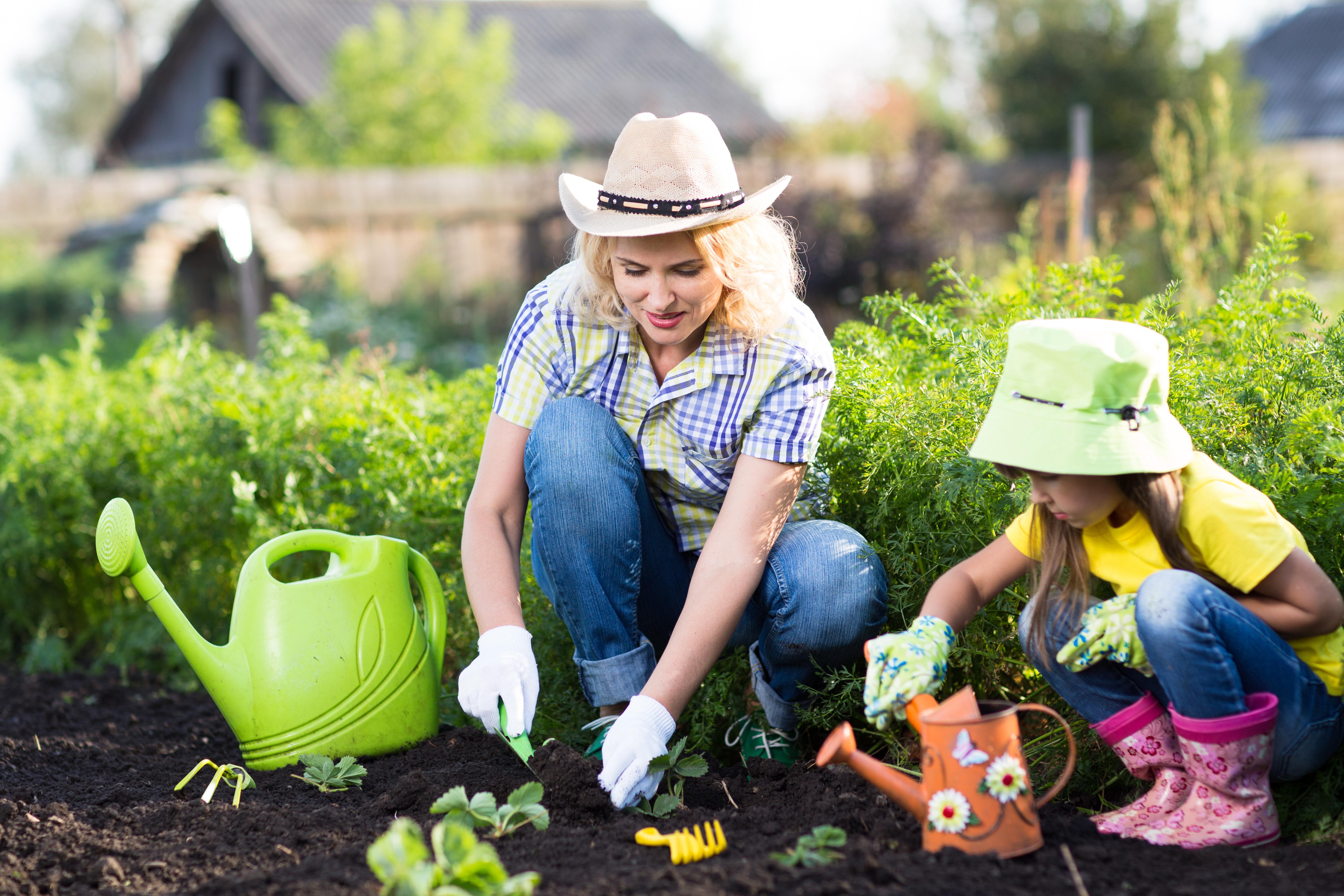 October 2015 dr lloyd stebbins for Planting a garden